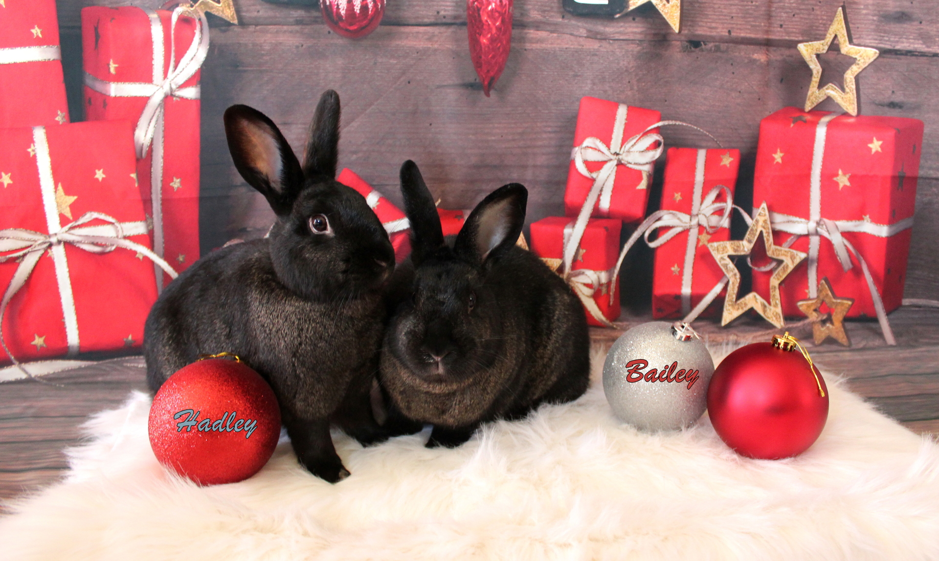 Bailey & Hadley (Windsor,ON)