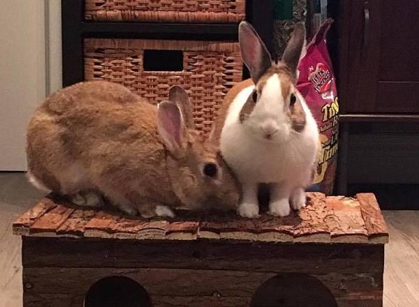 Wally and Daisy (Toronto Rabbit Rescue)