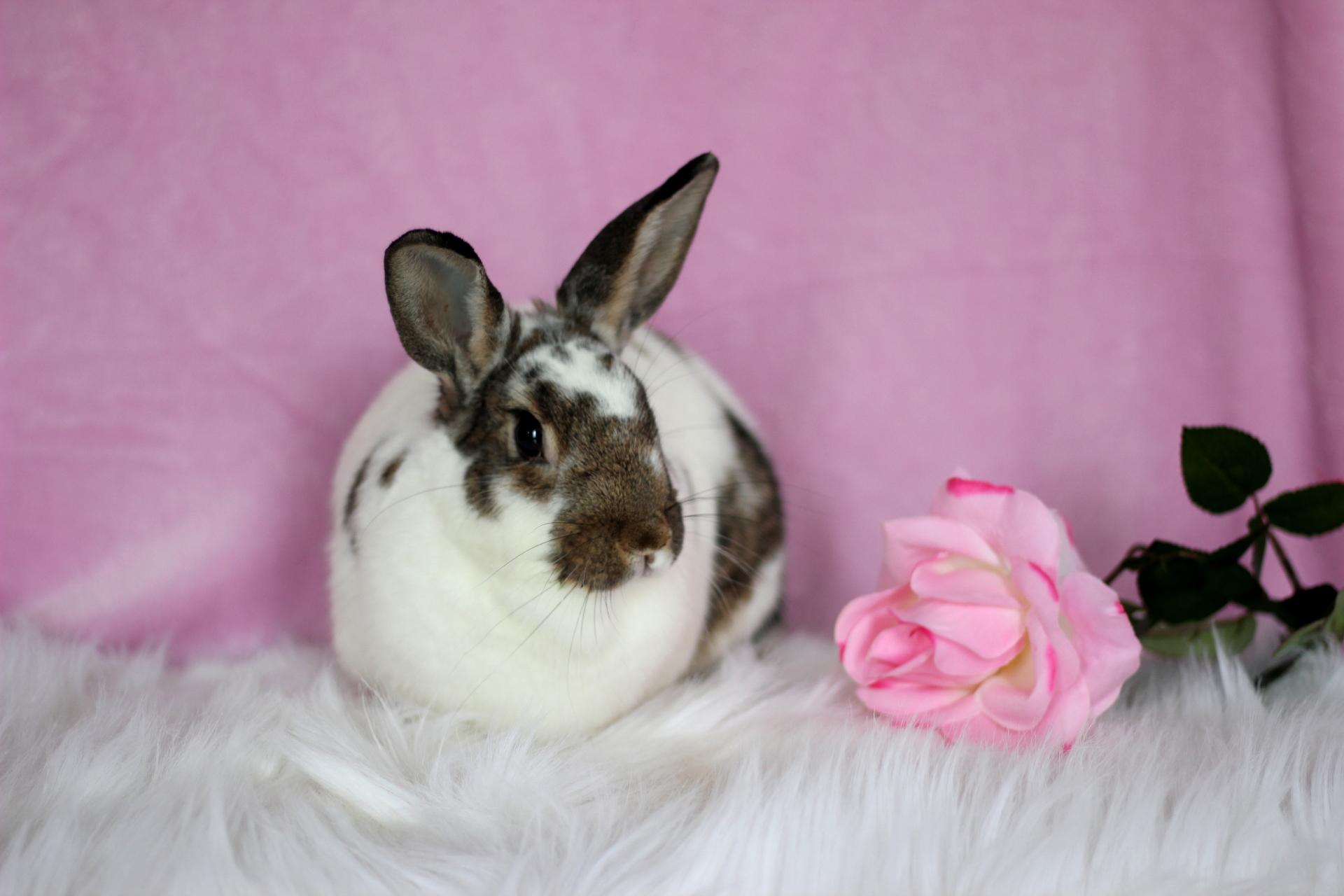 Thumper (Windsor,ON)