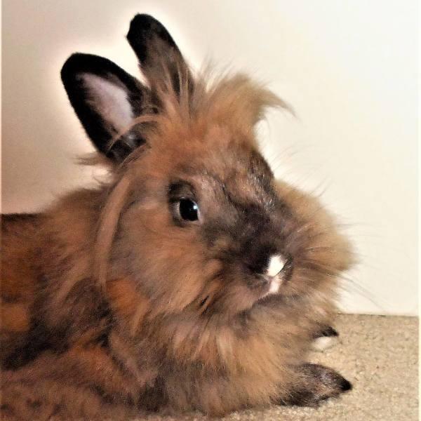 Matilda ( Toronto Rabbit Rescue)