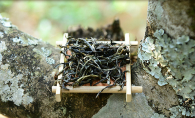 High-end Tea: Raw cake tea made with early-spring leaves of 800-years-old single tea tree
