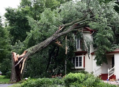 Storm Damage Removal by Licensed Arborist in Lake Charles