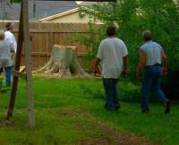 Tree Triming by Licensed Arborist In Lake Charles