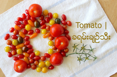 Tomato | ခရမ္းခ်ဥ္သီး