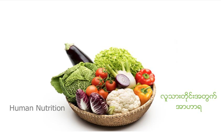 Human Nutrition | လူသားတိုင္းအတြက္ အာဟာရ