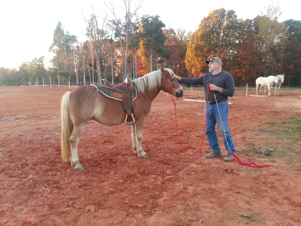 Horse Starting and Training