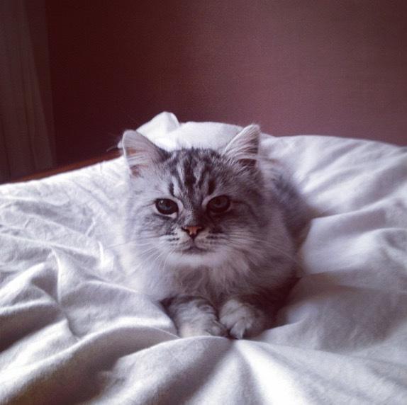 Ally as a kitten