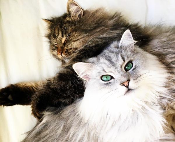 Aslan & Rufus