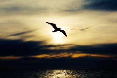 Soaring Bird- unsplash.com