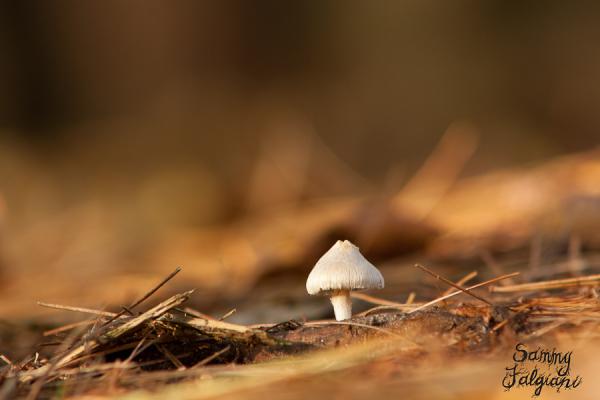mushroom, new york, upstate new york, mendon ponds, fungus