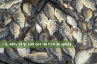Quality carp and coarse fish supplies
