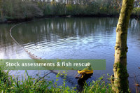 Stock assessments & fish rescue