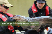 Non native fish & predator removals