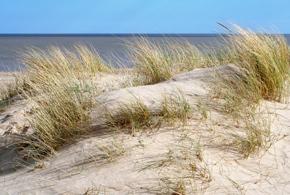 Suffolk Sand Dunes