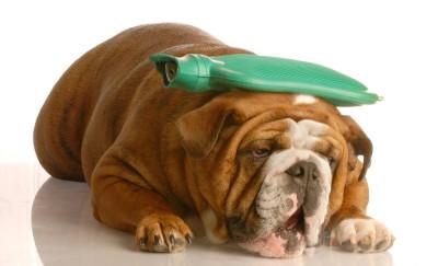 Tjaša Gruden,reiki, reiki za živali