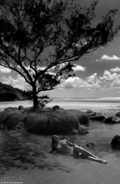 Tara Tree