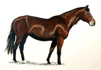 Acrylic Painting of a Horse - Jason Fowler