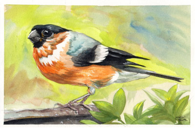 Black and Orange Bird Watercolor by Jason Fowler