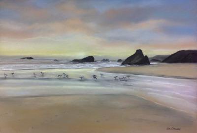 Harris Beach-Birds at Leisure