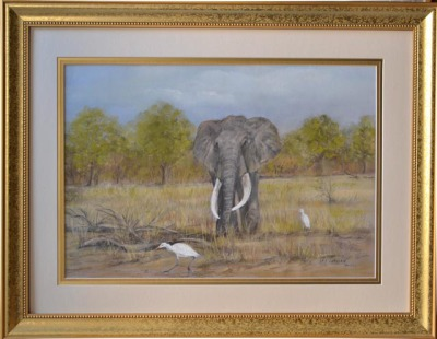 SA Bull and Egret