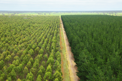 Timberlink Achieves Dual Environmental Certifications
