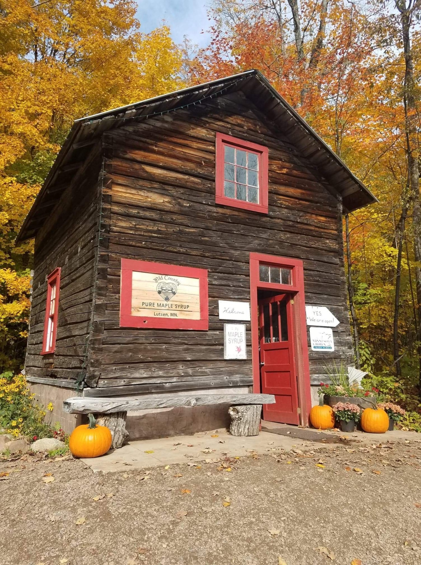 Wild Country Maple Syrup and Fall color