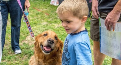 Adopt a Golden Retriever - GRCGLA Rescue