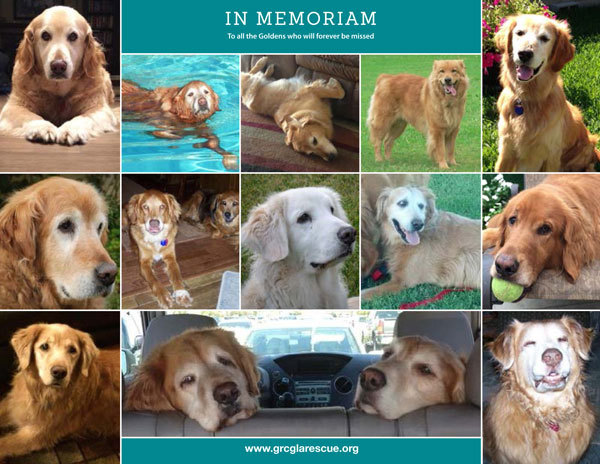 Adopt a Golden Retriever! GRCGLA Rescue 2017 Rescue Calendar is here.