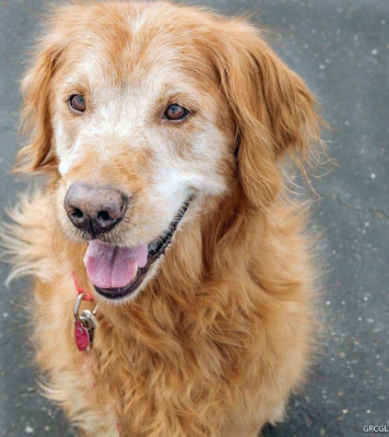 Richey '17 - 9 yrs, male Golden