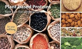 50 Plant Based Protein Sources
