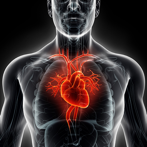 Older adults who get physical can lower their heart disease risk