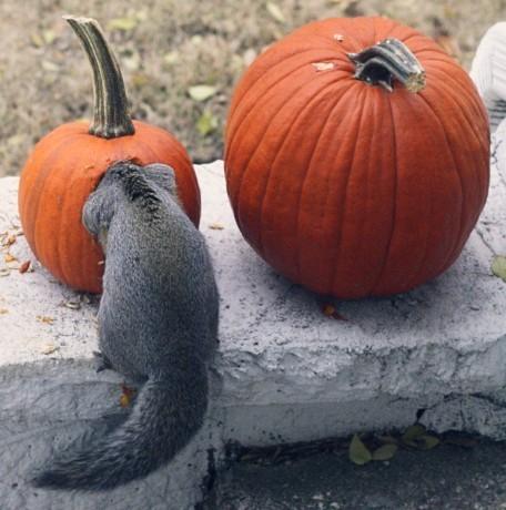 Eat`Pumpkin!!!