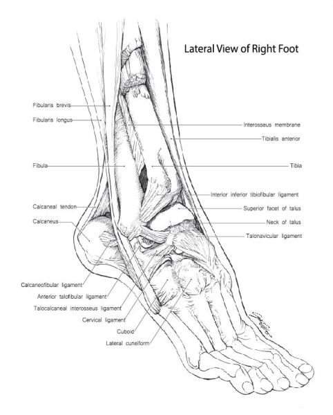 Lateral View of Right Foot
