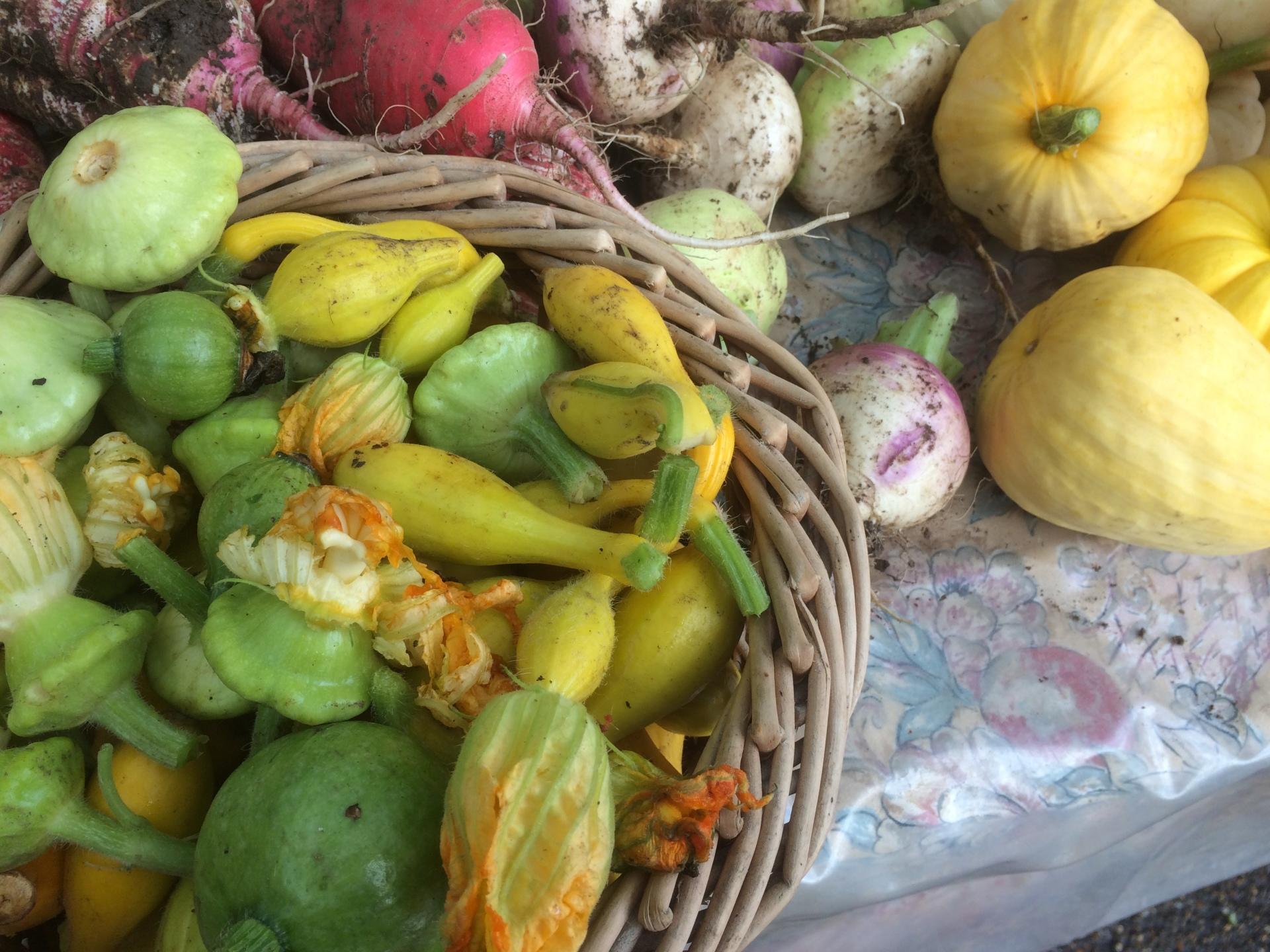 Local squash grown for us by Peak Organics Matlock