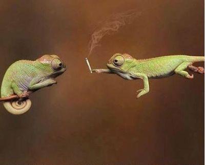 Het sociale aspect van cannabis.