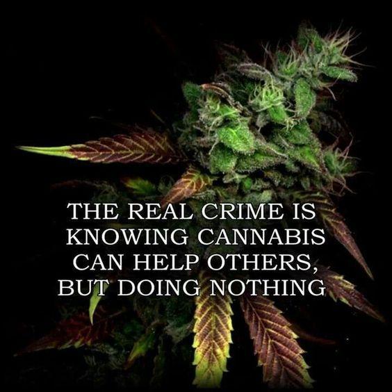 cannabis-olie-rick-simson-kanker