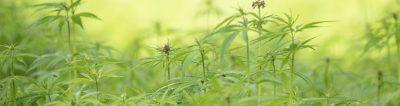 medicinale cannabis informatie brochure ministerie van volksgezondheid voor artsen en apothekers