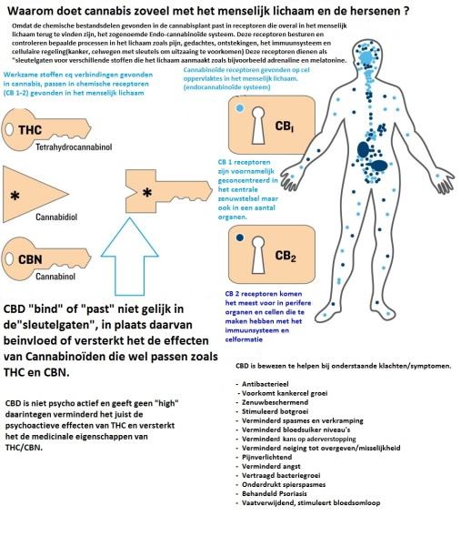 waarom-doet-cannabis-zoveel-lichaam-en-hersenen