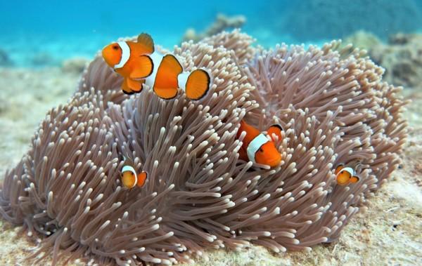 Discovery Khao Lak, Discovery Travel - Khao Lak, Khao Lak; Thailand; Similan; Discover Khao Lak; Similan Charter Service; Nature; Wildlife; Snorkelling; Snorkeling; Adventure; Relaxing; Beach; Surin; Surin Islands; Moken; Sea Gypsies