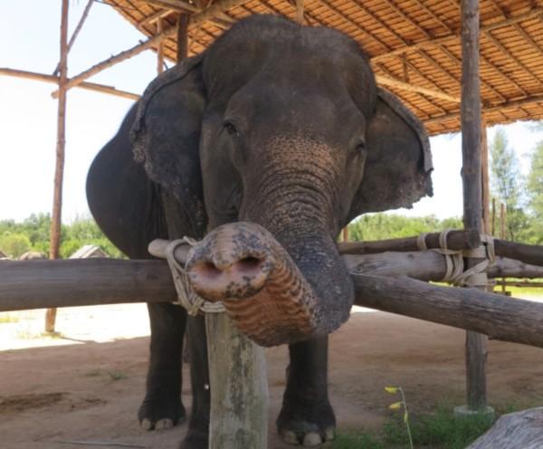 Discovery Khao Lak, Discovery Travel - Khao Lak, Khao Lak Mangrove Explorers; Discovery Travel Khao Lak; Eco Khao Lak Adventure; Seaside Elephant Retreat; Elephant Bathing; Ethical Tourism; Tour; Day Trip; Half Day Trip; Thailand;