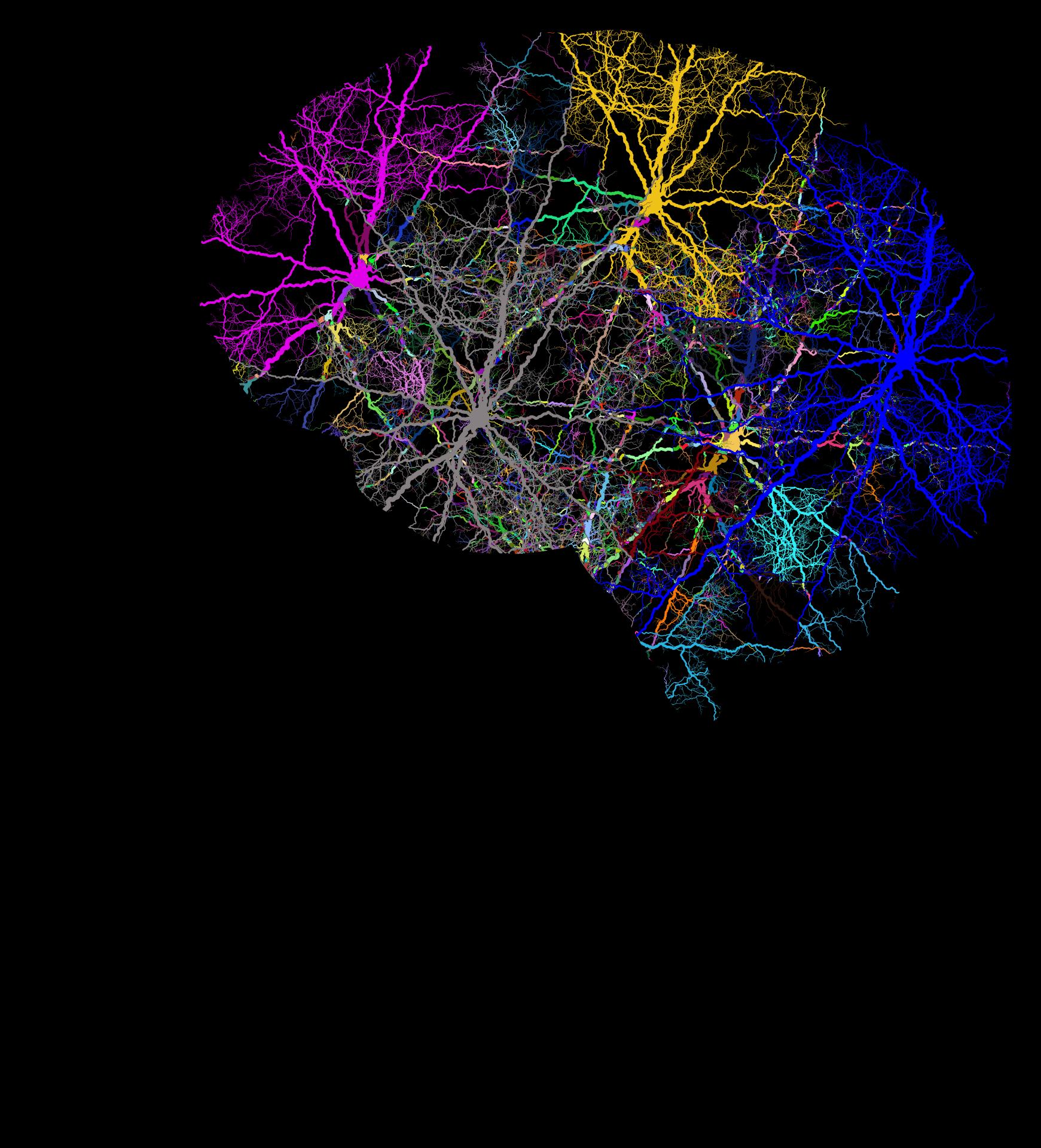 cranium-3244118
