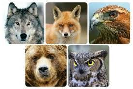 TOP 5 Spirit Animal Meanings: Fox, Owl, Wolf, Bear and Hawk