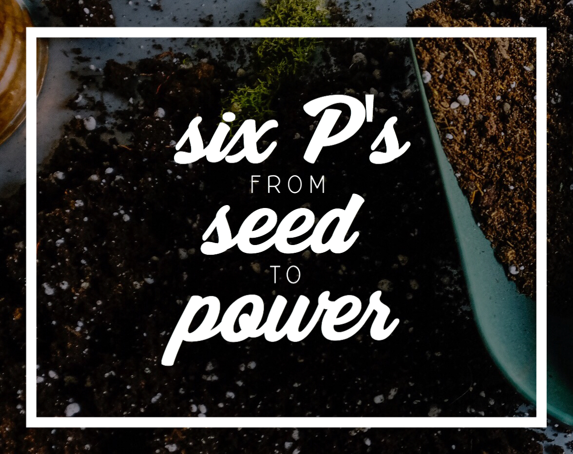 6 P's: From Seed To Power