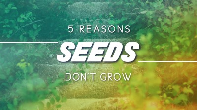 5 Reasons Seeds Don't Grow
