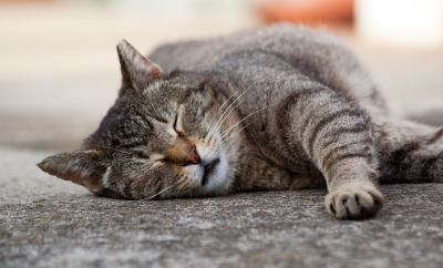 5 Reasons You're Always Tired