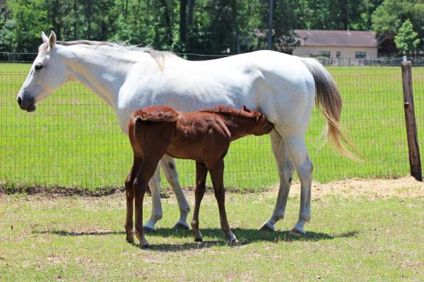 Mommy/Foal
