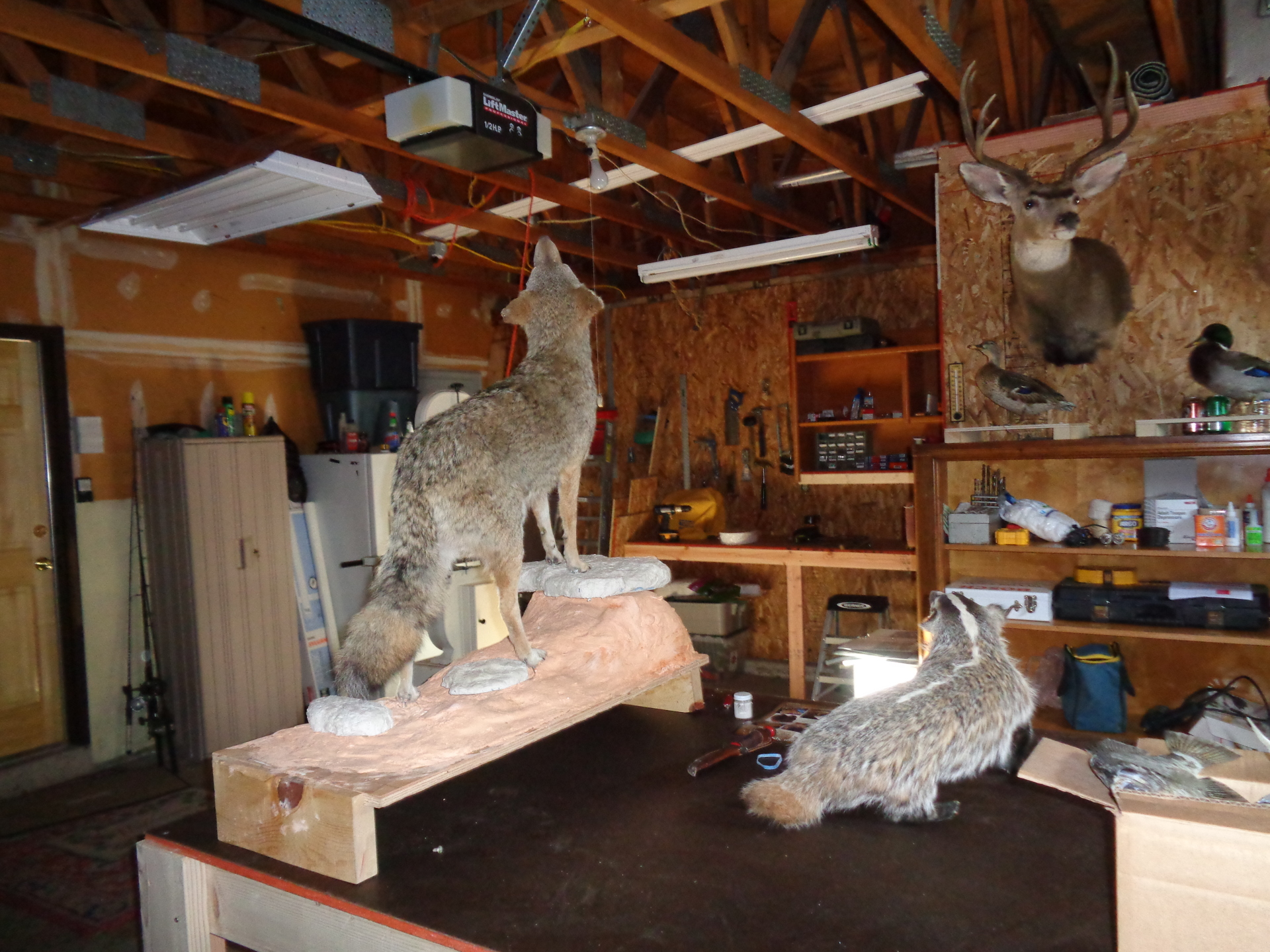 Golden Ridge Taxidermy, Taxidermy, Hunting, Taxidermist