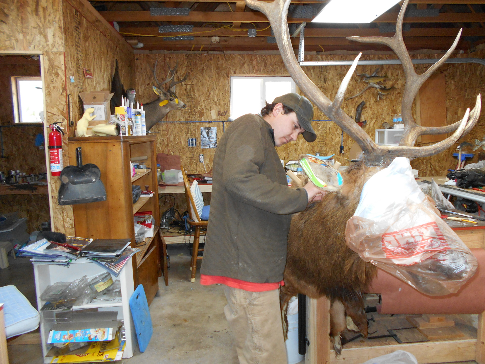 Golden Ridge Taxidermy, Taxidermy, Buck, Hunting, Taxidermist