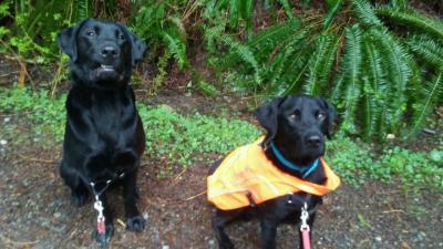 Jackson and Monty