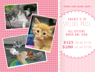 Kitten Adoption Special!